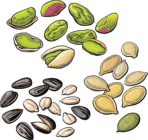 Best Sunflower Seed Illustrations, Royalty.
