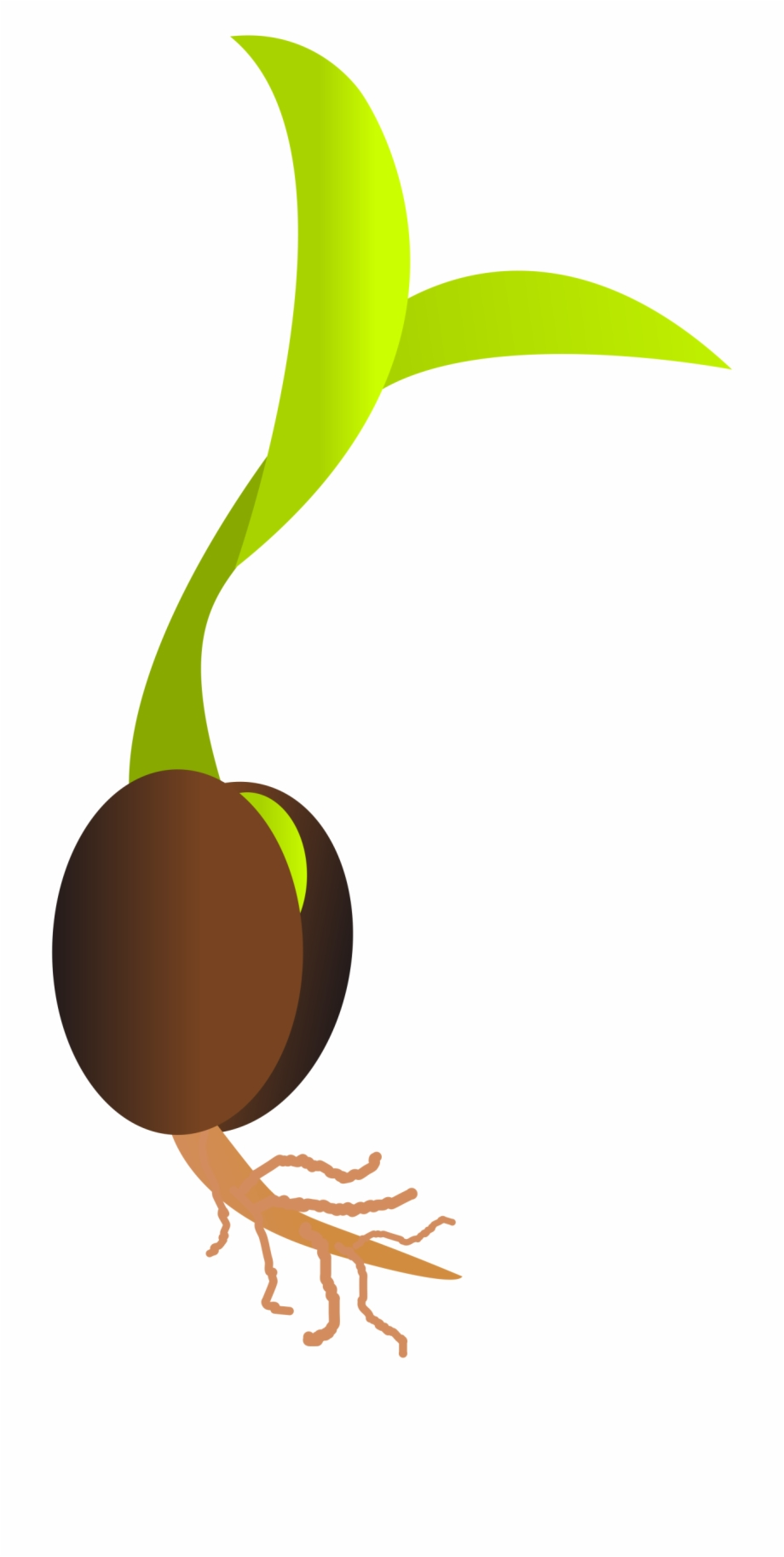 Seed Clipart One.