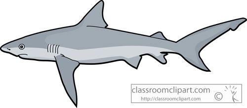 Shark clipart sharks tiger shark classroom clipart.
