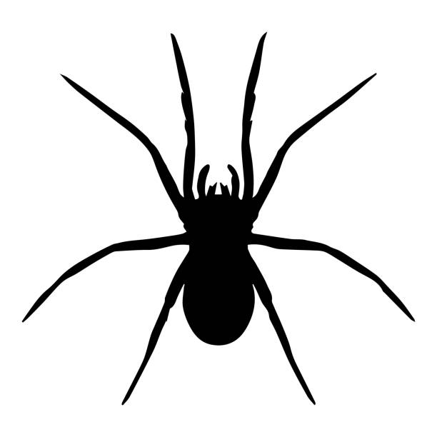 Best Spiders Illustrations, Royalty.