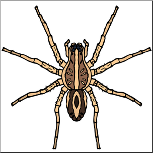 Clip Art: Spiders: Wolf Spider Color I abcteach.com.