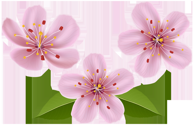 Spring Flowers Clip Art Transparent Image.