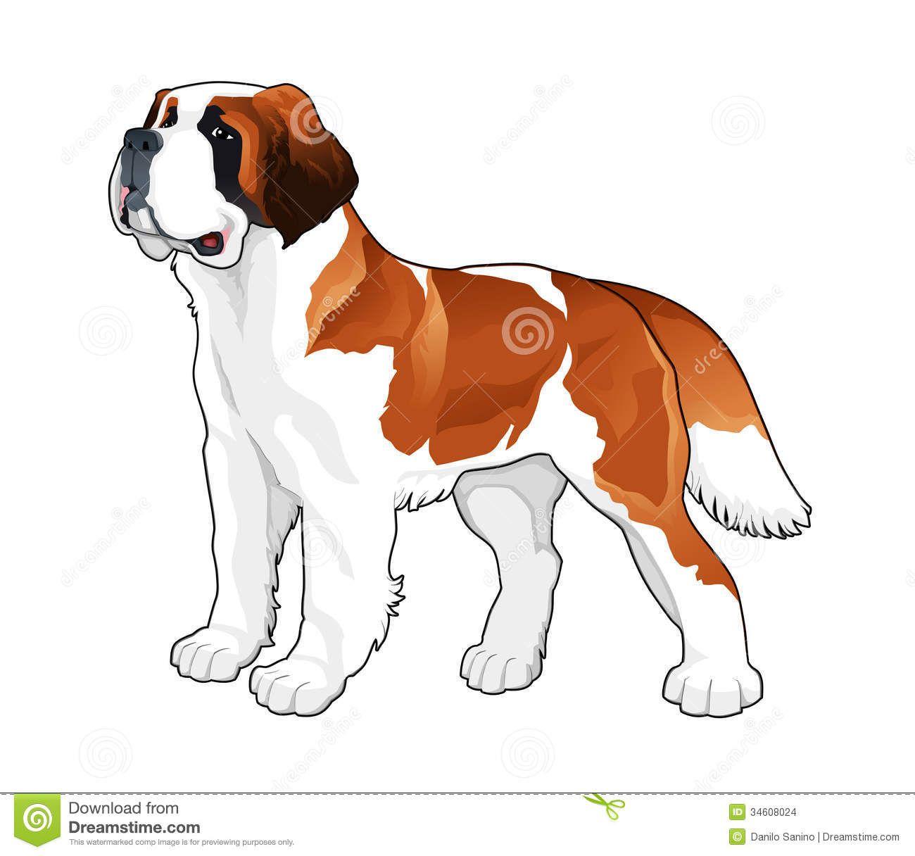 Clip Art of Saint Bernard Dogs.