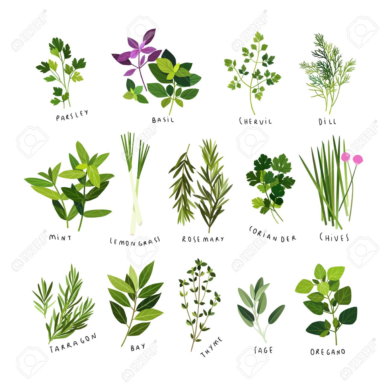 Clip art illustrations of herbs and spices such as parsley, basil,...