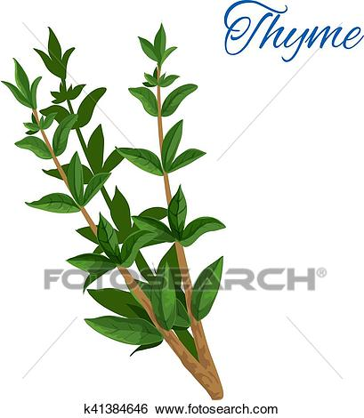 Thyme branch herb with leaves isolated icon Clip Art.
