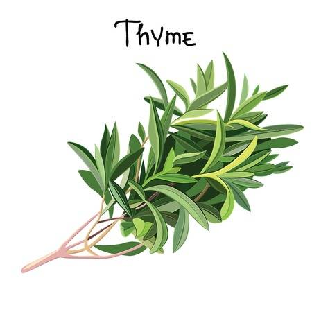 941 Thyme Flower Cliparts, Stock Vector And Royalty Free Thyme.