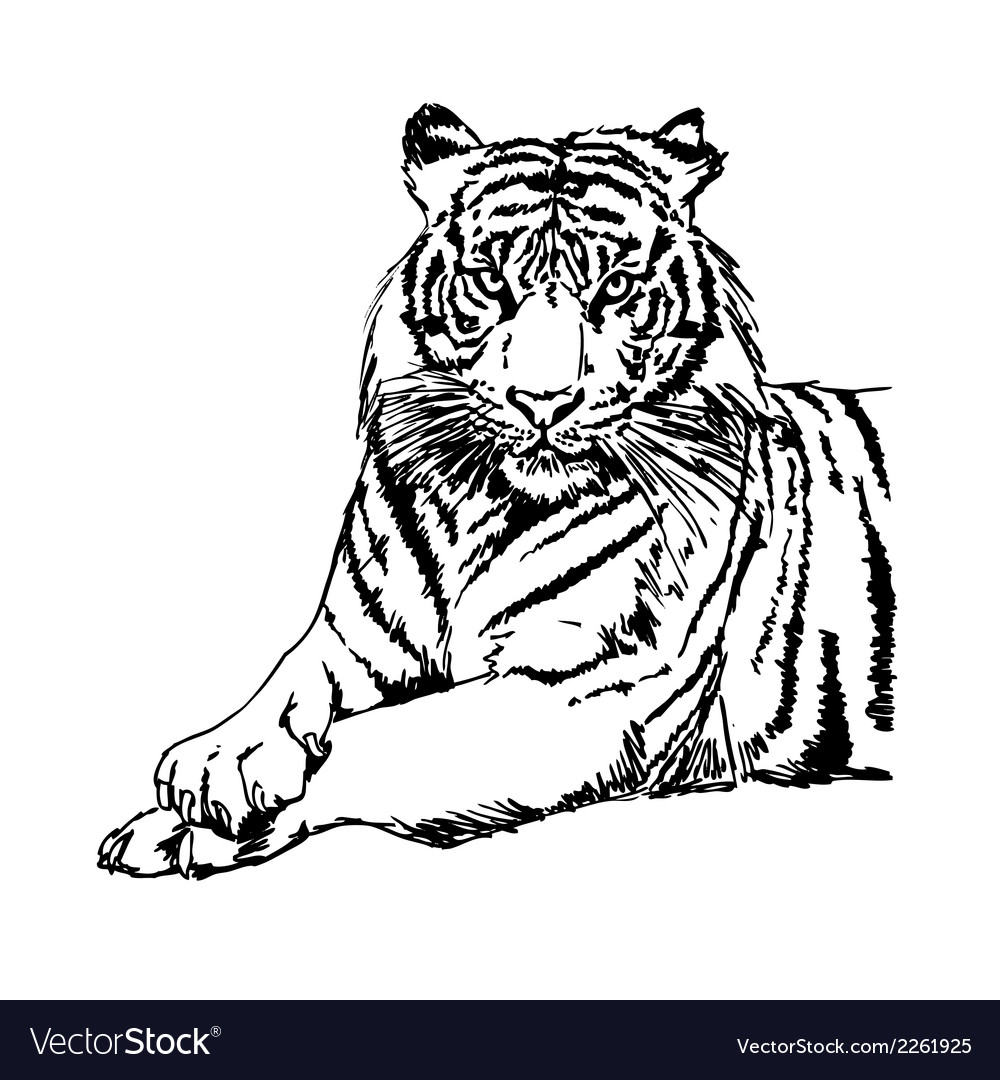 Tigers Clipart and Stock.