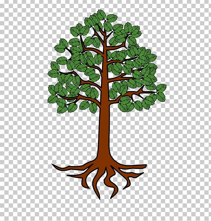 Tree Root Trunk PNG, Clipart, Alder, Branch, Clip Art, Drawing.
