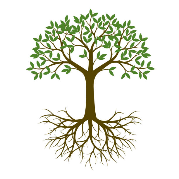 Best Tree Roots Illustrations, Royalty.