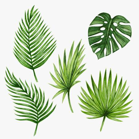 87,937 Palm Leaf Cliparts, Stock Vector And Royalty Free Palm Leaf.
