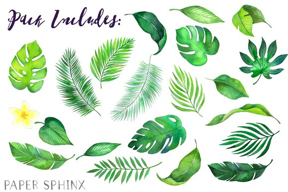 Tropical leaves clipart 1 » Clipart Station.
