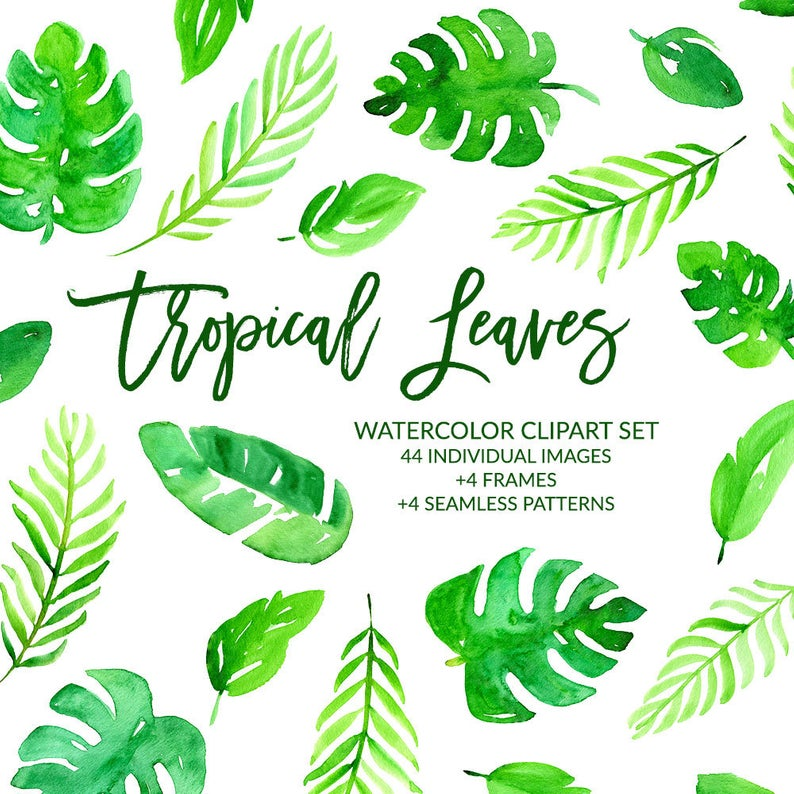 Watercolor Clipart, Tropical Leaves Clipart, Tropical Clipart, Summer  Clipart, Banana Leaf, Palm Leaf, Monstera, Jungle, PNG Commercial Use.