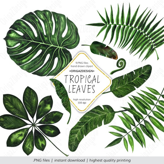 Tropical Leaf Clipart, Tropical Leaves Clipart, Monstera palm leaf Banana  tree leaves Watercolor Tropical Clipart floral elements clip art.