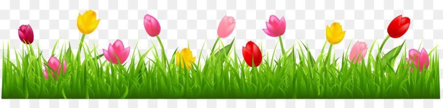 Tulip Flower png download.