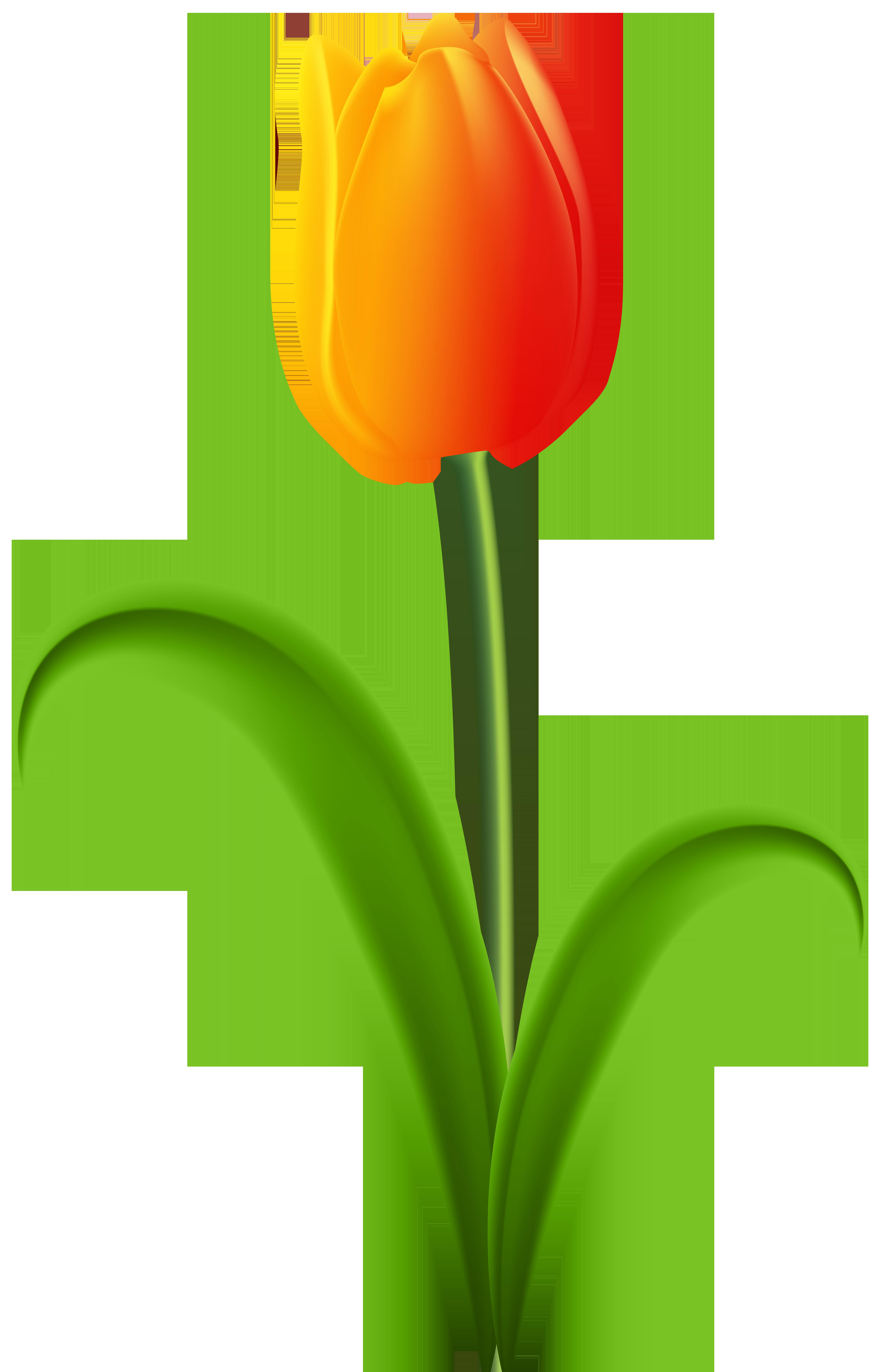 Beautiful Tulip Transparent PNG Clip Art.
