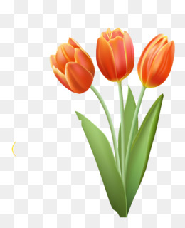 Collection of 14 free Orange clipart tulips aztec clipart vintage.