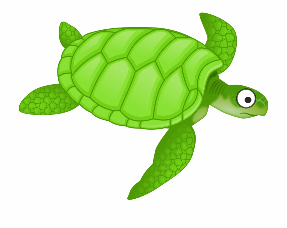 Clipart Cartoon Turtle 2 Png.