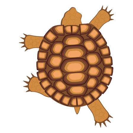 6,605 Turtle Shell Stock Vector Illustration And Royalty Free Turtle.