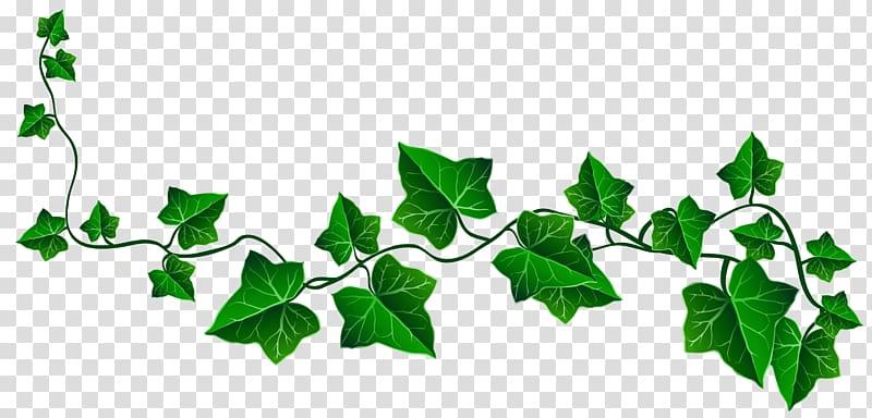 Vine Ivy Drawing , Vine Ivy Decoration , green leafed vine.