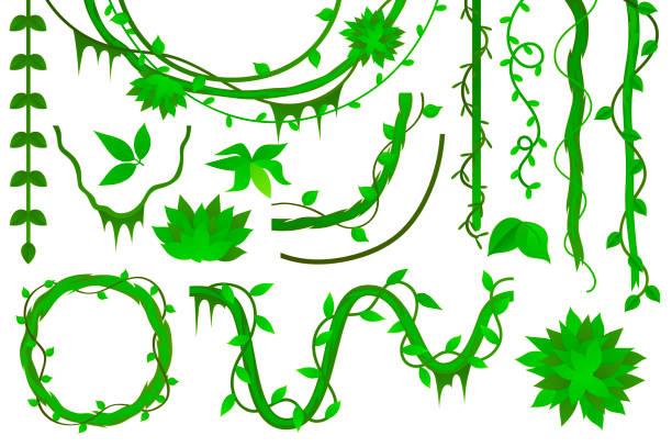 Best Vine Plant Illustrations, Royalty.