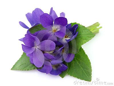 violet flower clip art #90.