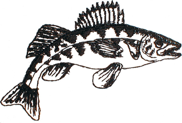 Free Walleye Cliparts, Download Free Clip Art, Free Clip Art on.