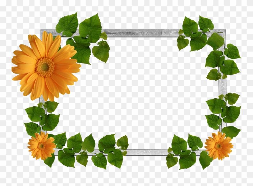Flower Frame Png, Wallpaper Backgrounds, Nature Plants,.