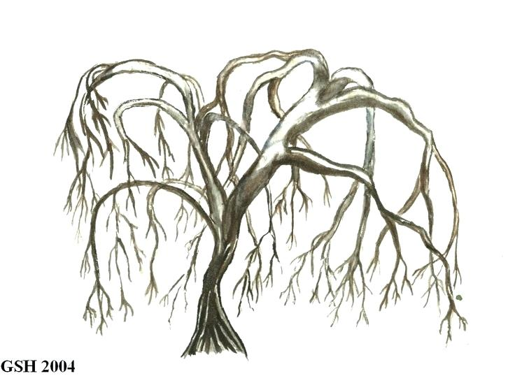weeping willow tree drawing.