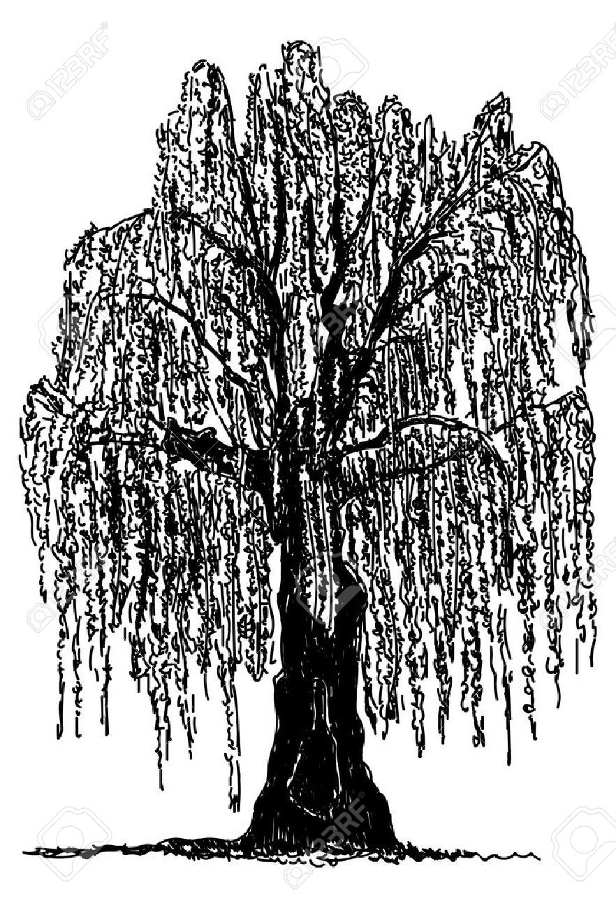 Weeping willow tree clipart 4 » Clipart Portal.