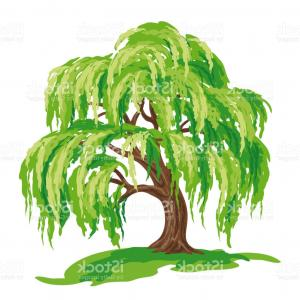 Png Weeping Willow Tree Salix Alba Wall Decal Clip Art.