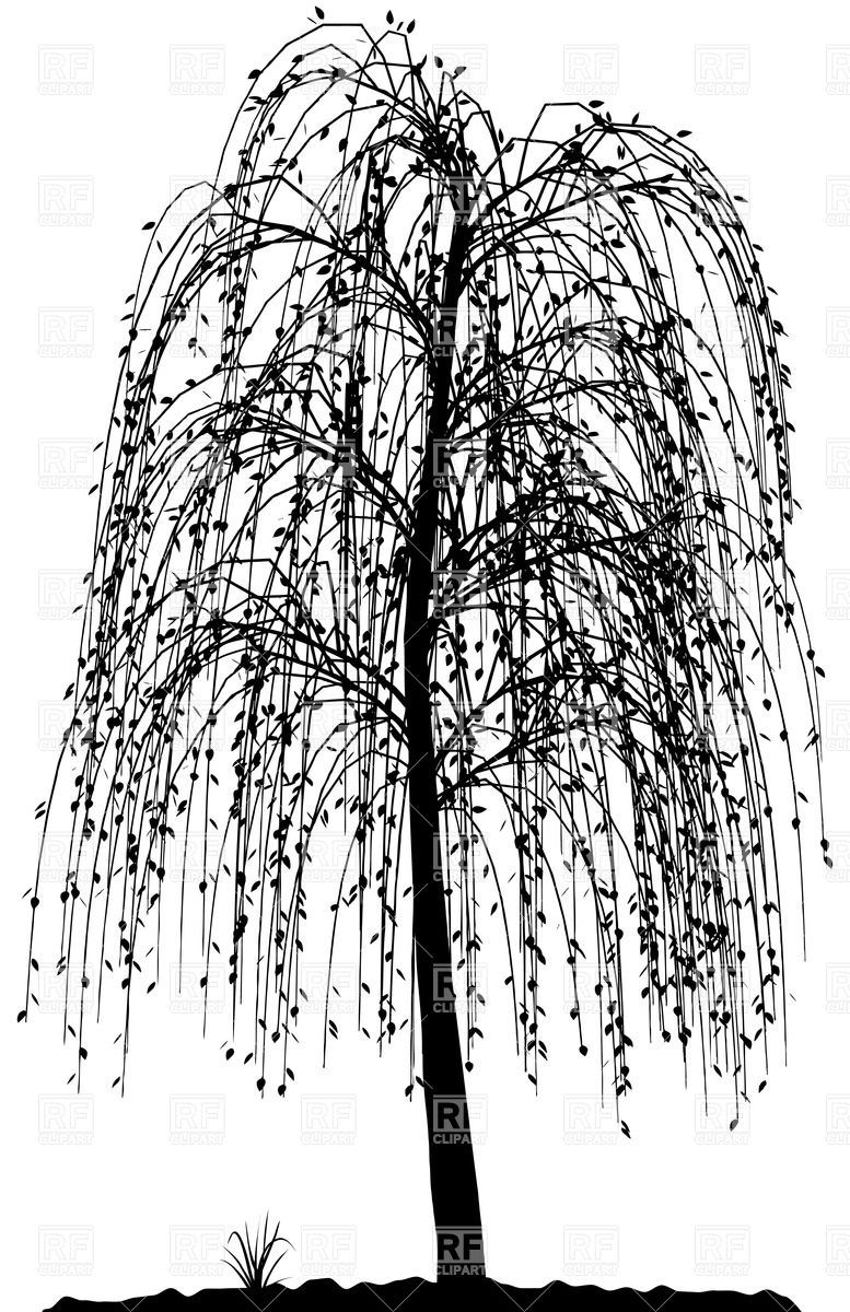 High detailed willow tree silhouette Vector Image.