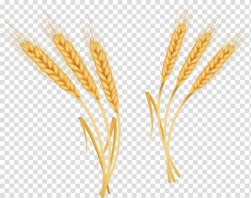 Emmer CorelDRAW , Wheat material transparent background PNG clipart.