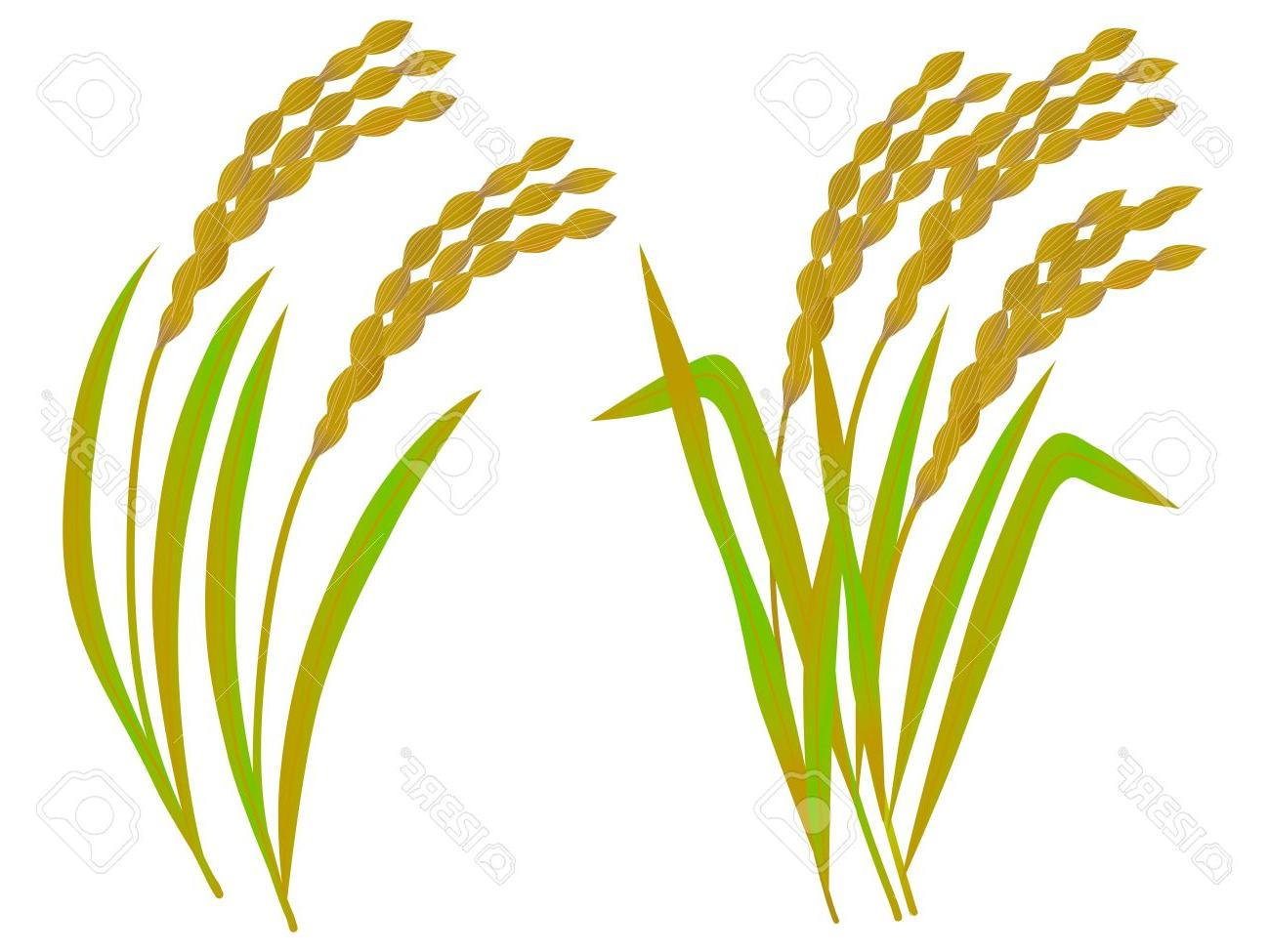 Collection of Wheat clipart.