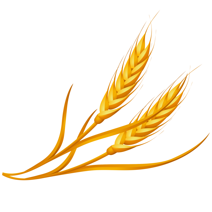 Wheat Clipart PNG Image Free Download searchpng.com.