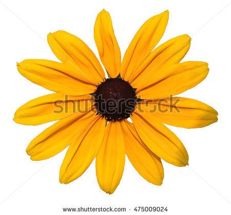 Flower Clip Art Stock Images, Royalty.