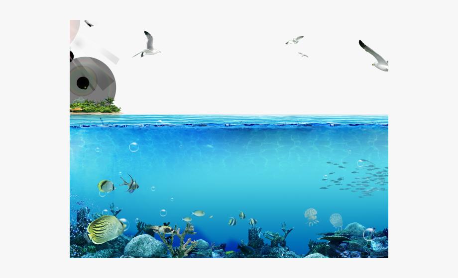 Underwater Clipart Ocean Ecosystem.