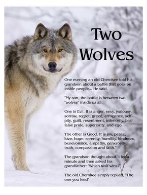 25+ best ideas about Wolves Fighting on Pinterest.