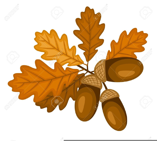 Oak Leaves Acorns Clipart.