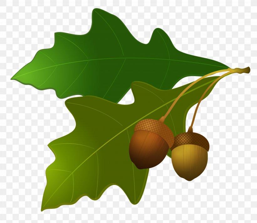 Acorn Oak Leaf Clip Art, PNG, 4284x3709px, Acorn, Autumn.