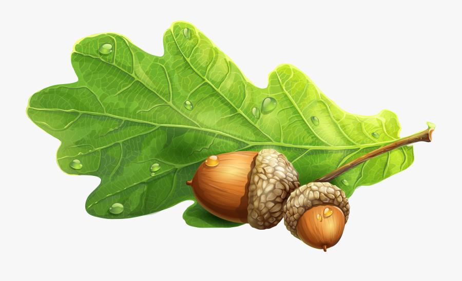 Acorn Clipart Oak Leave.