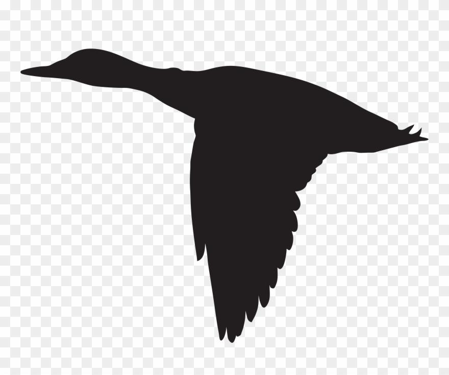 Albatross Clipart Clip Art.