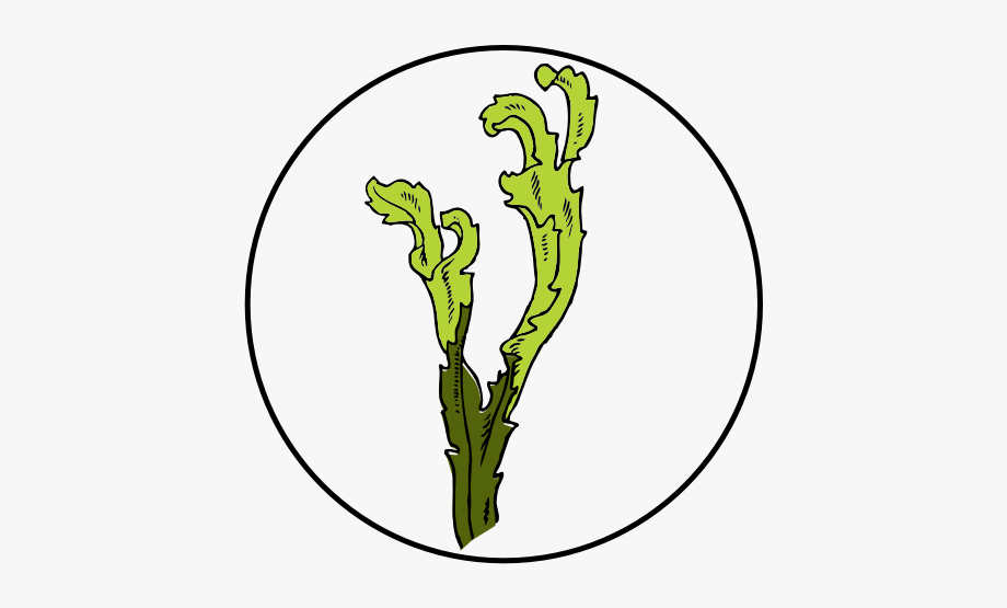 Algae Clipart Germ.