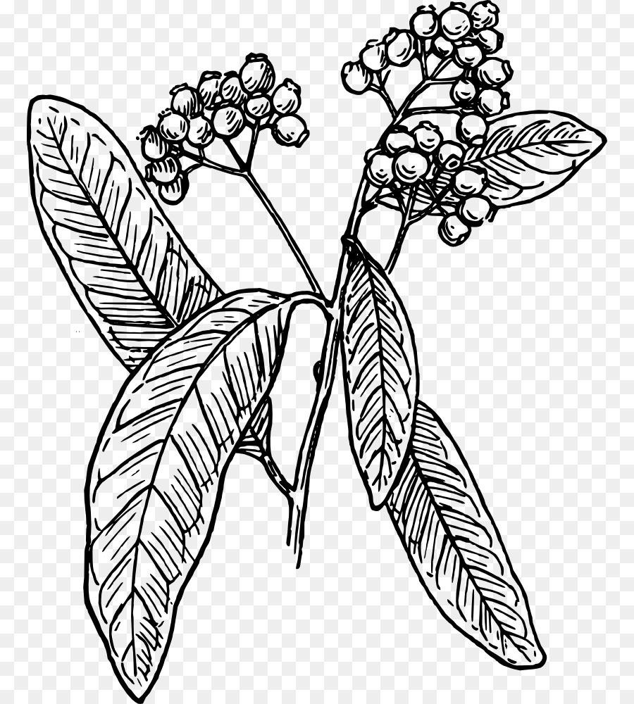 Allspice Black and white Clip art.