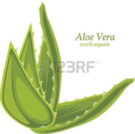 1,349 Aloe Vera Stock Vector Illustration And Royalty Free Aloe.