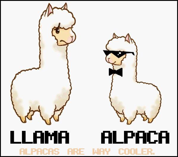 Cartoon Alpaca Vs Llama Clipart.