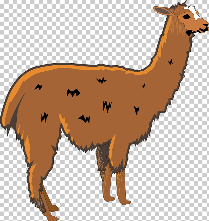Llama Alpaca , Llama Head s PNG clipart.