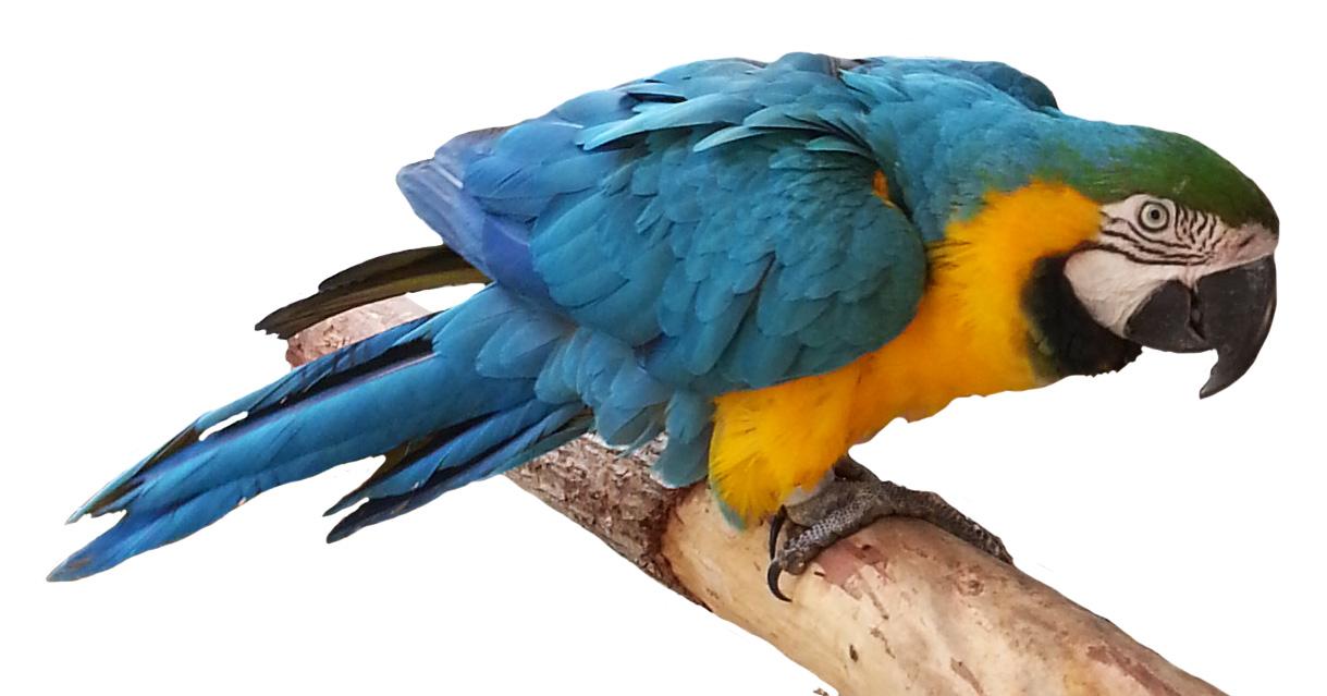 Parrot clipart jpeg, Picture #3052437 parrot clipart jpeg.