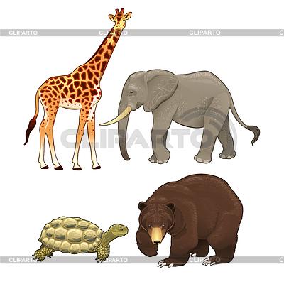 African wild animals.
