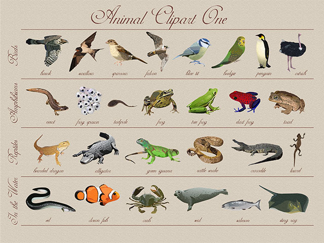 Realistic Animal Clipart.