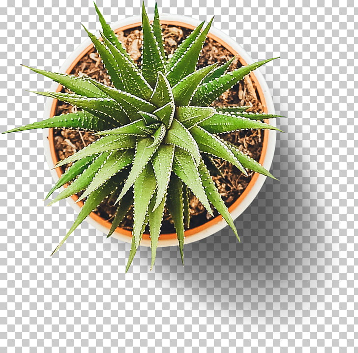 Plant Grid Insignia on M Up Top Acres, plant PNG clipart.